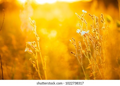 Nature. Spring view in sunny field and white meadow wild flowers