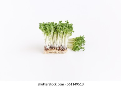 nature sprouts green broccoli cabbage on white background