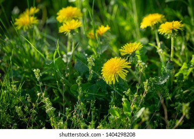 Nature summer background with flowers