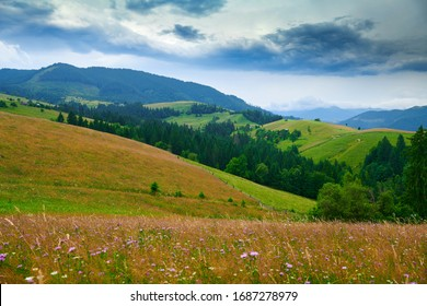 nature, summer landscape in carpathian mountains, wildflowers and meadow, spruces on hills, beautiful cloudy sky