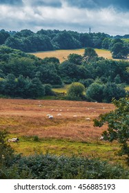 nature summer panorama in East Sussex, England