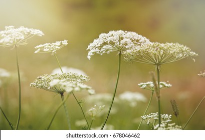 Nature in summer, wild flowers in meadow. 
