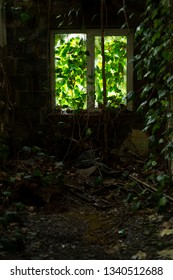 Nature takes over inside a derelict building.