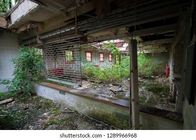 Nature taking over at an abandoned and derelict lunatic asylum/hospital, Cane Hill, Coulsdon, Surrey, England, UK