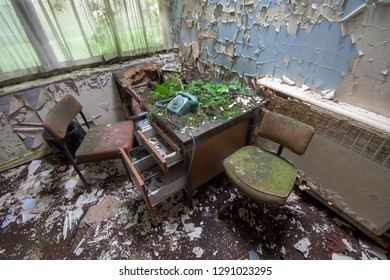 Nature taking over an office with flaking paint on the walls at an abandoned and derelict lunatic asylum/hospital (now demolished), Cane Hill, Coulsdon, Surrey, England, UK