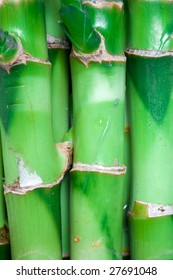 Nature theme: an image of green stems of bamboo