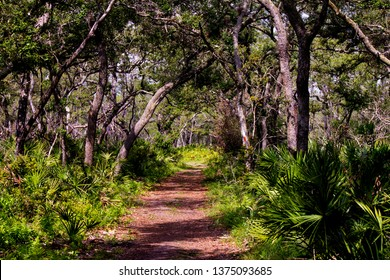 A nature trail in central Florida
