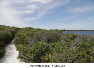 nature trail at Grayton beach state park florida