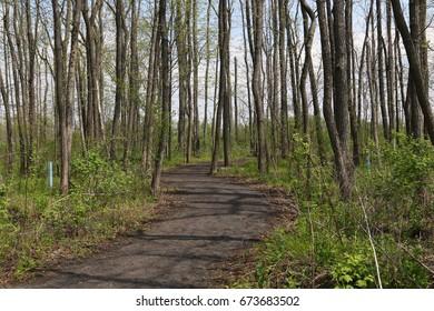 Nature trail at Montezuma Audubon Center, Seneca Falls, New York