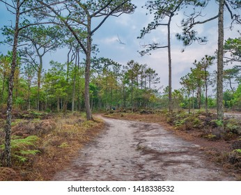 Nature trail in the morning on Phu Kradueng mountain national park in Loei City Thailand.Phu Kradueng mountain national park the famous Travel destination