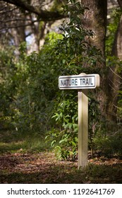 A nature trail in the rain forest. A sign with an entry to the forest.