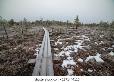 nature trail in swamp in deep snow in winter. overcast day, bog with wooden boardwalks. tourist recreation in Latvia