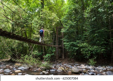nature trail,path with wooden bridge in deep forest (National Park, Thailand)