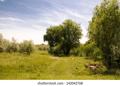 the nature of the tree and grass