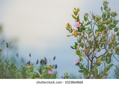 Nature. Tree green leaves and flowers in fog