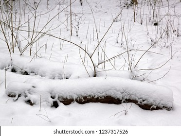 Nature and tree under the snow, countryside near Paris (France)