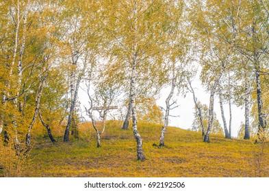 Nature, trees