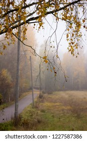 Nature and trees in autumn colours with fog and a road