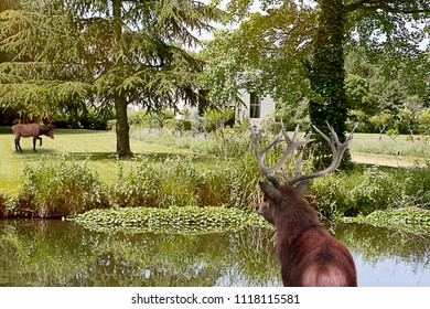 Nature Trees with deer and stream
