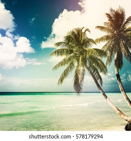 nature tropical background with coconut palm. Toned, square image
