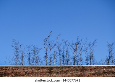Nature versus urban - little birch trees growing on a roof, concept of resilience, determination, motivation, persistence