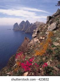 Nature View