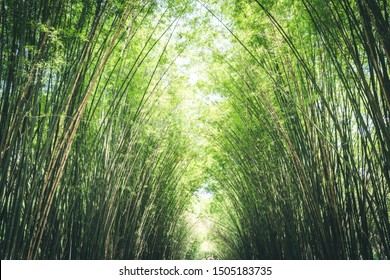 Nature view of bamboos trunks with natural light in blur style. Beautiful green leaves and lines of tree with bokeh in tropical rain forest. Growing bamboo border design over blurred sunny background