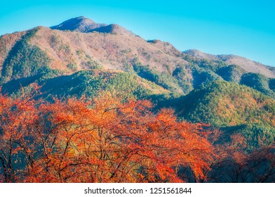 Nature view of Fujikawaguchiko hills with red trees in foreground in autumn. The Japanese resort town is located at the northern foothills of Mount Fuji.