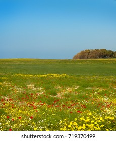 Nature view of an open green field landscape with red anemones and yellow chrysanthemums with blue sky