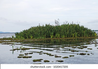Nature view of Water Lettuce Lake  at Thalay Noi Lake Phatthalung