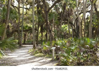 Nature walk with plaque in an open forest area in Myakka River State Park in Florida.