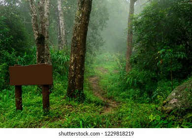 Nature walk trail in rain forest with empty wood sign. misty landscape background