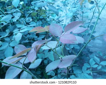Nature wallpaper of green leaf and plants and flowers