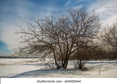 The Nature Of Western Siberia trees  snow  day mood