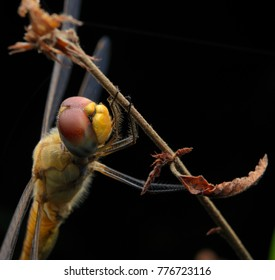nature wildlife of dragon fly hanging at night