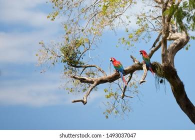 Nature and wildlife of Mato Grosso do Sul Pantanal