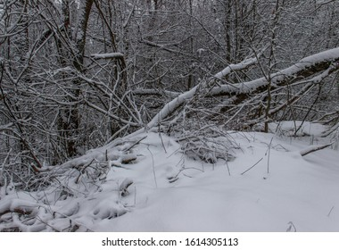 Nature winter background . Winter landscape. Snow covered trees. Frozen twigs. Selective focus.