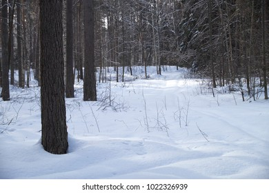 nature winter forest snow drifts