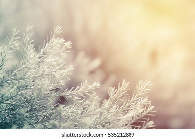 Nature winter  in fresh morning background