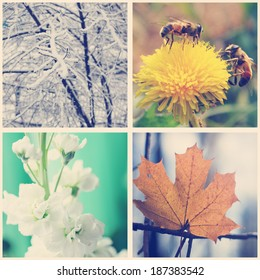 Nature in winter, spring, summer and autumn. Four seasons, instagram effect