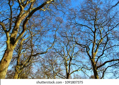 A nature of winter trees without leaves after autumn season.