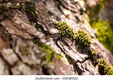 Nature wood bark pattern or texture. Old rough tree brown natural wooden abstract background. Timber material. Textured dry trunk surface closeup with details.