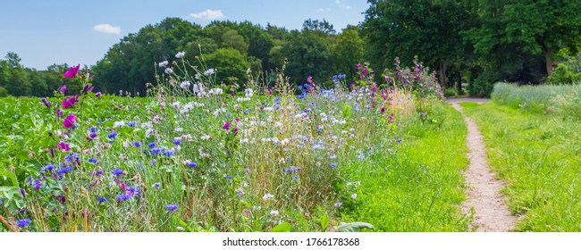 Nature-inclusive or circular and sustainable agriculture with wild flowers along potato field in the Netherlands, Europe