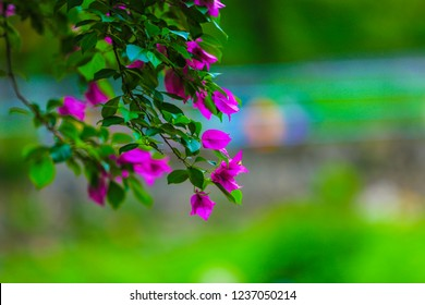 naturel flawer hd image