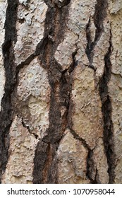 Natures background/abstract, wood bark