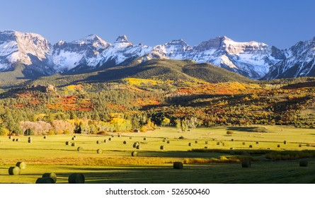 Nature's Bounty. Hay ready for harvest in Golden Field. Orange & Red Aspen and Snowy Mountains in Background.