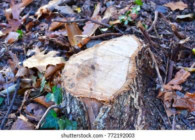 Nature's Chopping Block