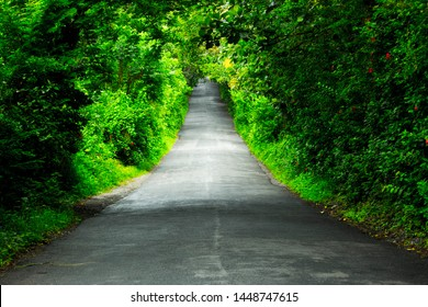 The Nature's Green tunnel. Photo taken in Kerala, India