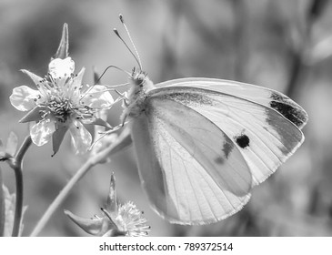 natures photography-Butterfly on flower/macro photgraphy