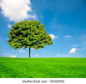 Nature:The green grass and tree